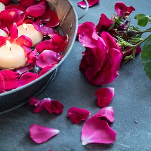 spa-rose-garden